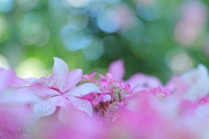のんやん ピンク 花