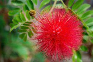 ワードプレス ブログ Green Ring 赤い花