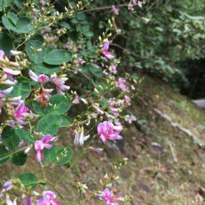 ワードプレス ブログ Green Ring ピンクの花