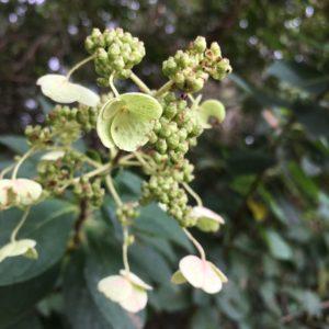 ワードプレス ブログ Green Ring 白い花