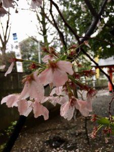 ワードプレス ブログ Green Ring 金神社5