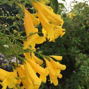 ワードプレス ブログ Green Ring 沖縄 黄色い花