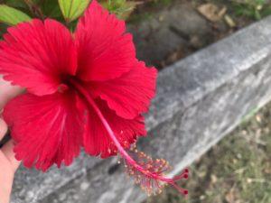 ワードプレス ブログ Green Ring 沖縄 ハイビスカス