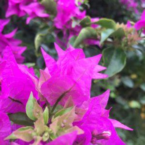 ワードプレス ブログ Green Ring 沖縄 ブーゲンビリア