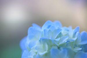 ワードプレス ブログ Green Ring 青い花
