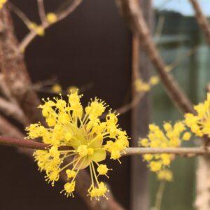 岐阜県 婚活 結婚相談所 Green Ring 季節の花 フラワー 黄色