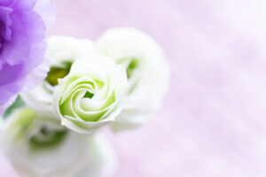 ワードプレス ブログ Green Ring 花